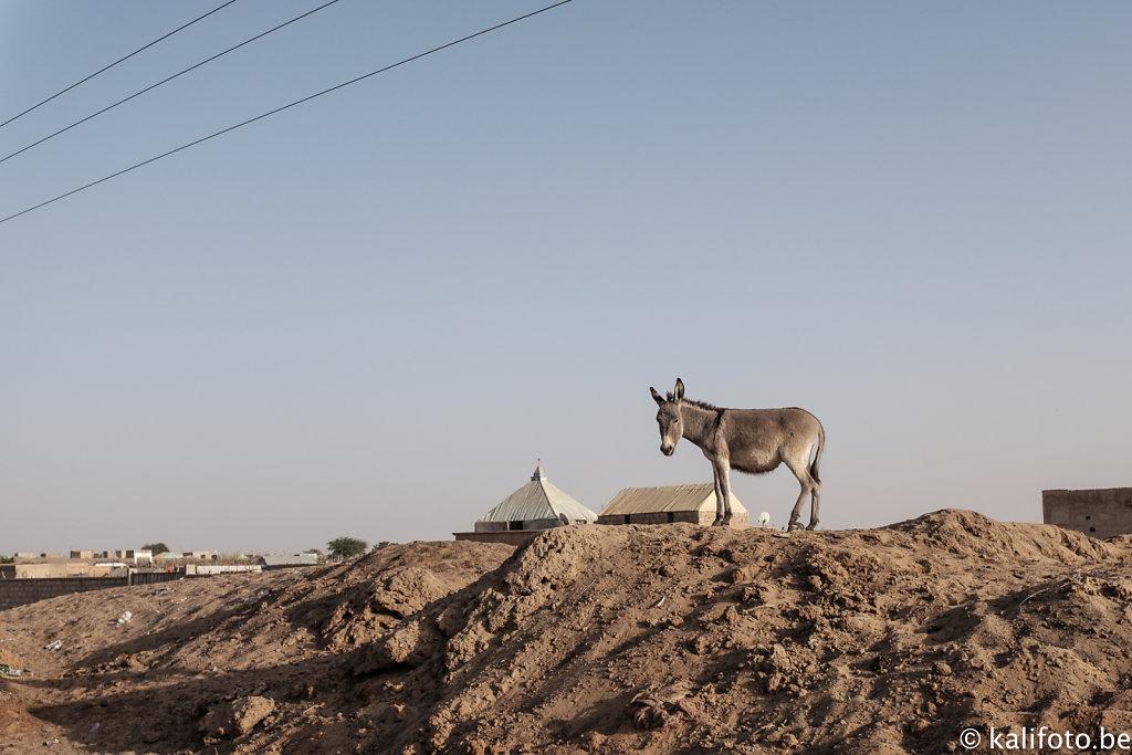Nouakchott-4.jpg