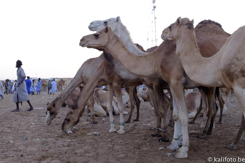 Nouakchott-23.jpg